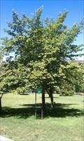 Image for Franklin Delano Roosevelt Centennial Tree - Capitol Park - Sacramento, CA