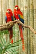 Image for Exotic Birds Garden@Badoca Park - Alentejo, Portugal