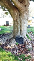 Image for Headstone-Eating Tree - Alta Mesa Cemetery - Palo Alto, CA