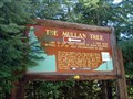 Image for Mullan Tree #164