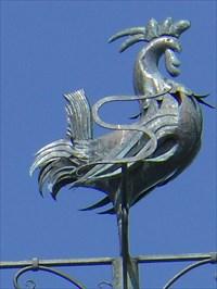 Photo du coq avec tout ses détails bien définis et de proportion très grande.  Rooster picture with all its details well defined and very large proportion