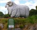 Image for Giant Merino Ram at the Agrodome. Ngongotaha.  New Zealand.