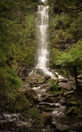 Our visit to Erskine Falls