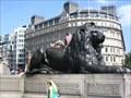 Image for Trafalgar Square Lion