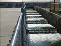 Image for Fish Ladder at the Nimbus Fish Hatchery