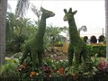 Image for Giraffe Topiaries - Busch Gardens, Tampa