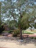 Image for Brad Fields Tree - McElroy Hall OSU - Stillwater, OK