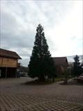 Image for Mammutbaum Junghansring Ergenzingen, Germany, BW