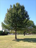 Image for John Bryant Memorial Tree - Richardson, TX
