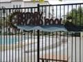 Image for Ryland Park Pool - San Jose, CA