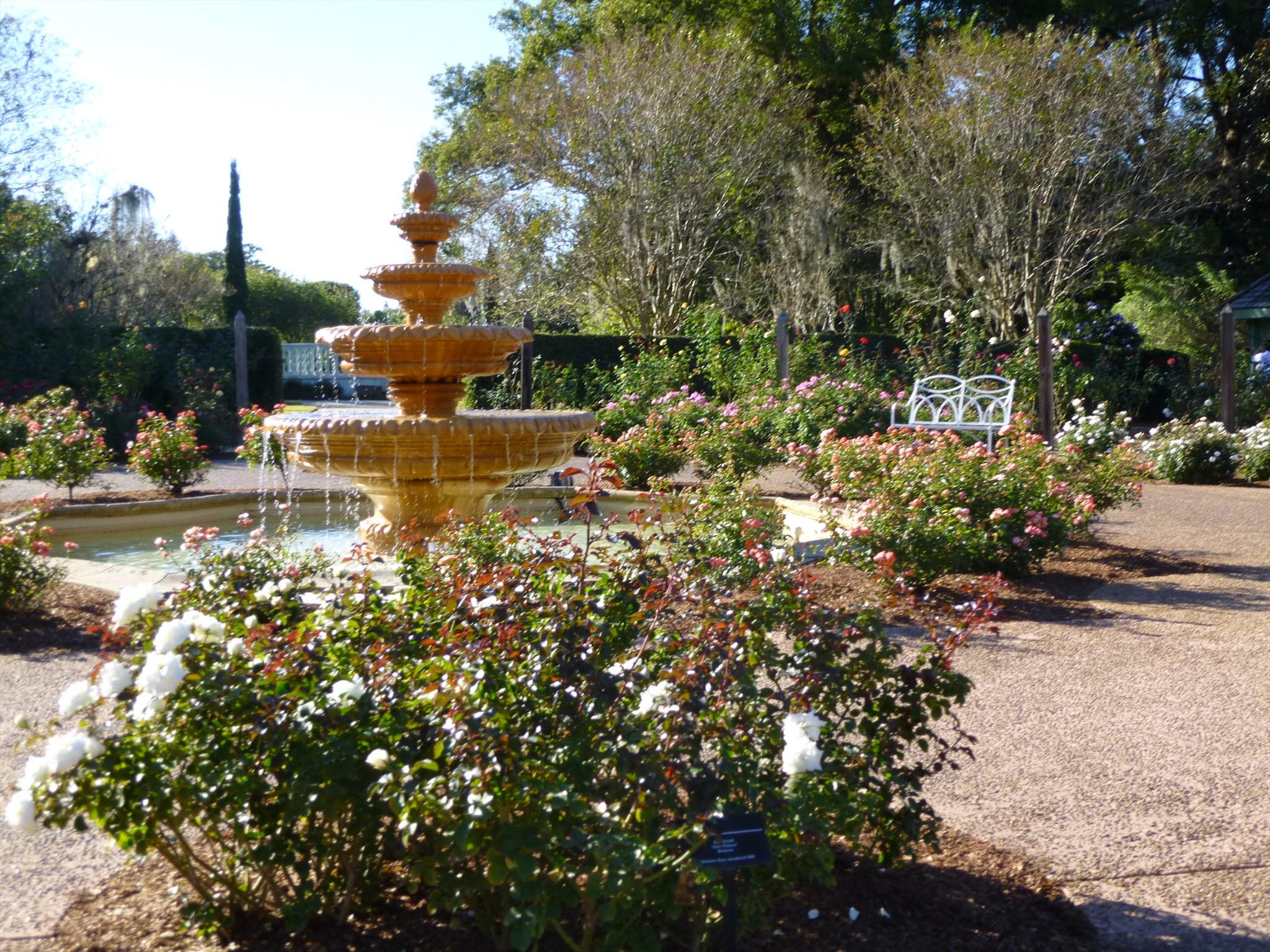 Leu Gardens - Rose Garden - Orlando - Florida, USA