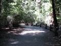 Image for Redwood Trail - Big Basin Redwoods Park - Boulder Creek, CA