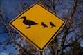Image for Duck Crossing, Salt Lake Community College