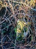 Image for Horton Parish - Milestone 2   Taunton