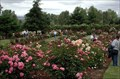 Image for Heirloom Roses - St Paul, OR