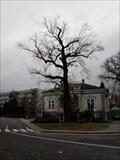 Image for Liliovník v Novém Jicíne - Nový Jicín, Czech Republic
