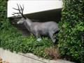Image for Bronze Buck - Walnut Creek, CA