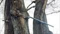 Image for Fence Rail Eating Tree - Henley Elementary School - Klamath Falls, OR
