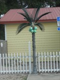 Image for Electric Palm Tree - Crawfordville, FL