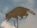Image for Racoon Weathervane,  Hwy 192 West, Kissimmee, Florida.