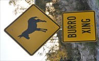 Image for Burro Crossing - Havasu Lake, CA