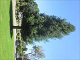 Image for Norm Rosander - Menlo Park, CA