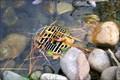 Image for Koi Pond - Epcot