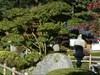 Japanese Garden - Dierentuin Amersfoort - NL - 1