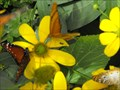 Image for Butterfly house at Turtle Bay - Redding