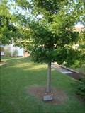 Image for Joe Reagan tree - University of Central Oklahoma - Edmond, OK