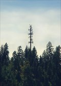 Image for Lake Coeur d'Alene Tree Cell Phone Tower