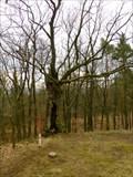 Image for TB 2116-25.0 Zámecký vrch