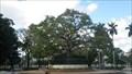 Image for Fraternity Tree - Havana, Cuba