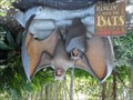 Image for Hangin' With the Bats  -  Escondido, CA