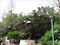 Image for Sue the T. rex - Animal Kingdom, Disney World, FL