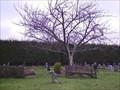 Image for Macfarlane Tree, Bickleigh Churchyard, near Plymouth, Devon UK