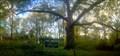 Image for Kile Oak - Irvington, IN
