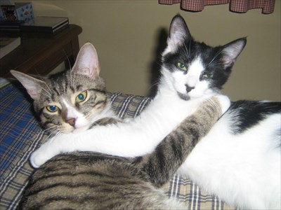 The white one (Rico) was originally named 'Patches'. The Tabby (Charlie) was Rex.