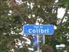 Rue Colibri no-1    Colibri street no-one