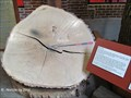 Image for May's Oak Tree Ring Display - York Agricultural and Industrial Museum - York, PA
