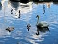 Image for Lake Eola - Orlando, FL
