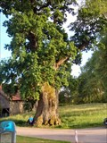 Image for oak tree, 900 years old, in Eisolzried