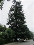 Image for Peg Tree, Lake Oswego, OR