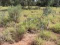Image for 76852 - 100km Mark - Bollon, QLD