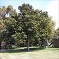 Image for Thomas R. Cuff - Menlo Park, CA