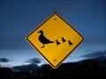 Image for Duck Crossing - South Jordan, UT