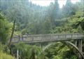 Image for Bridge to Nowhere - Whanganui National Park, New Zealand
