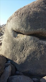 distance shot of the lizard petroglyph