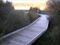 Image for Nukuhou Salt Marsh Boardwalk.  Bay of Plenty. New Zealand.
