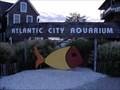 Image for Atlantic City Aquarium - Atlantic City, NJ